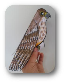Karearea - New Zealand Falcon {Make & Do Activity Pack}
