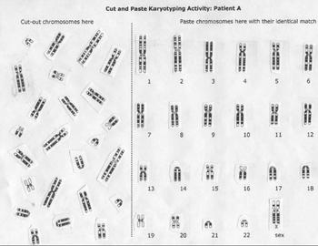 karyotype chromosome lab activity by beverly biology tpt. Black Bedroom Furniture Sets. Home Design Ideas
