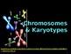 Karyotype Lab PPT