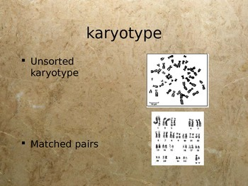 Karyotype PowerPoint
