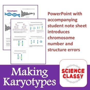 Karyotyping Lab /  Make Human Karyotypes