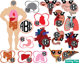 Kawaii Organs Anatomy Cutting science SVG Doctor Medic hospital ADN Clip Art 41s