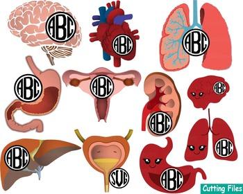 Kawaii Organs Anatomy Cutting science SVG Doctor Medic hospital ADN Clip Art 41s