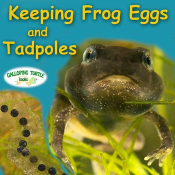 Keeping Frog Eggs and Tadpoles