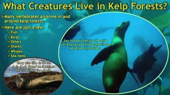 Kelp - PowerPoint & Activities