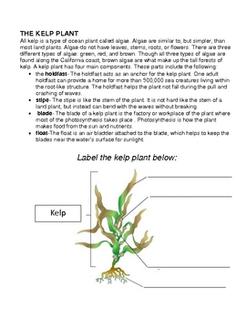 Kelp Forest Study Guide Workbook
