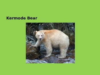Kermode Bear - Power Point - Information Facts Pictures History