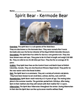 Kermode Spirit Bear - Lesson Review Article Questions Facts Vocab Word Search