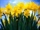 Keyboarding-Typing Games- Spring Into Spring- Name That Sp