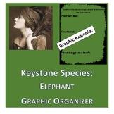 Keystone Species ELEPHANTS graphic organizer