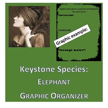 Keystone Species Elephants Graphic Organizer By Life In The Middle