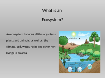 Keystone Species Powerpoint