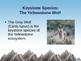 Keystone Species: The Yellowstone Wolf Powerpoint