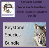 Keystone Species, Wolves in Yellowstone, Impact on Ecosyst