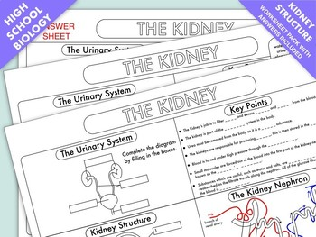 Kidney teaching resources teachers pay teachers kidney structure and function worksheet kidney structure and function worksheet ccuart Images