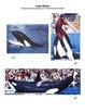 Killer whale Resource File