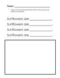 Kindergarten Adjectives