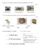 Kindergarten Assessment Main topic and Key Details (Inform