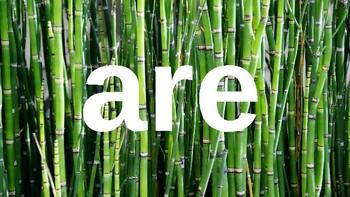 Kindergarten Dolch Sight Words Powerpoint - Bamboo