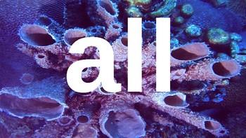 Kindergarten Dolch Sight Words Powerpoint - ocean coral
