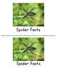 Kindergarten Emergent Readers {Spiders}