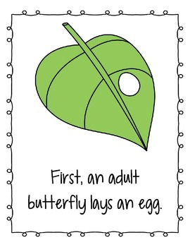 Kindergarten Life Cycle of a Butterfly