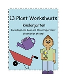 Kindergarten Plant Worksheets