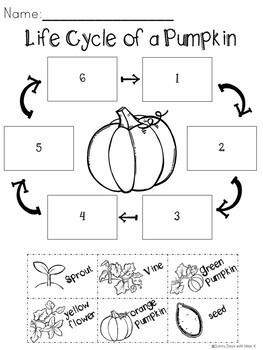 Kindergarten Pumpkin Science, Pumpkin Exploration, Pumpkin Investigations