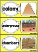 Kindergarten Reading Street Amazing Word Cards Ants and Their Nests