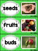 Kindergarten Reading Street Amazing Word Cards Flowers