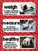 Kindergarten Reading Street Amazing Word Cards Little Panda