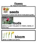 Kindergarten Reading Street Amazing Words Unit 2 with Pictures