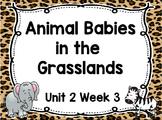 Kindergarten Reading Street Animal Babies in Grasslands Unit 2 Week 3 Flipchart
