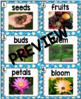 Kindergarten Reading Street: Flowers Write the Room