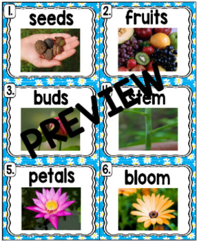 Kindergarten Reading Street: Flowers Write the Room