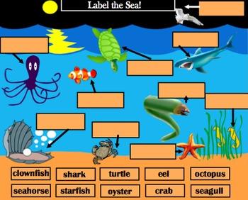Kindergarten SMARTBoard Centers/ Wholegroup Activities