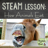 STEAM for Primary Grades- How Animals Eat