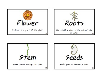 Kindergarten Science Fusion Vocabulary Words with Definitions and Pictures