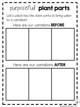 Kindergarten Science Notebook {Spring Edition}
