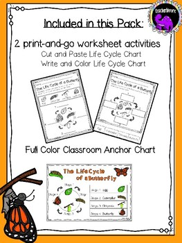 Kindergarten Science: The Life Cycle of a Butterfly