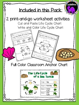 Kindergarten Science: The Life Cycle of a Sea Turtle