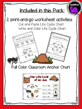 Kindergarten Science: The Life Cycle of an Ant