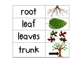 Kindergarten Science Vocab Plants/ Flower