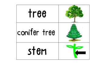 Kindergarten Science Vocab Plants/ Flower