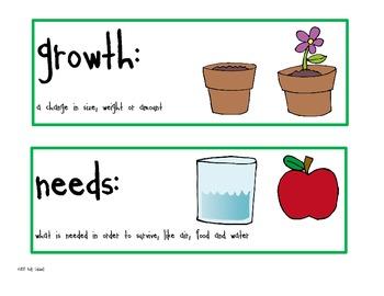 Kindergarten Science Vocabulary Cards