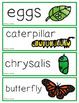 Science Vocabulary Cards Kindergarten Bundle
