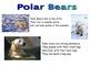 Kindergarten SmartBoard Fun With Bears