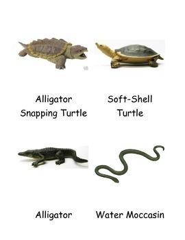 Kinds of Alligator 3 Part Cards