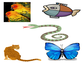 Kinds of Animals