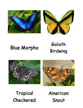 Kinds of Butterflies